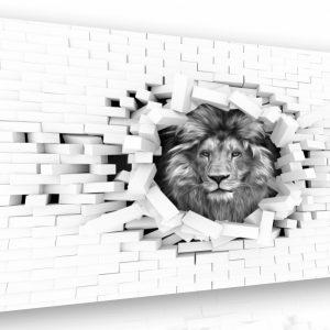 Černobílý obraz - lev