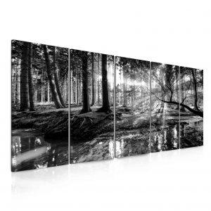 Obraz černobílá pohoda lesa