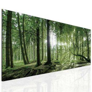 Obraz ranní slunce v lese 55x25 cm