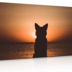 Obraz Pes u západu slunce