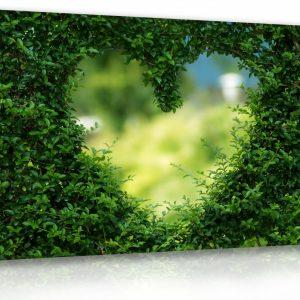 Obraz živý plot - srdce