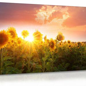 Obraz slunečnice při západu slunce
