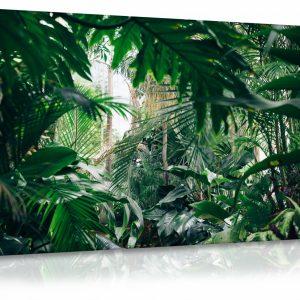 Obraz domácí džungle