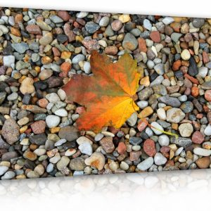 Obraz list na kamenech