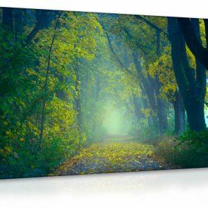 Obraz lesík - cesta