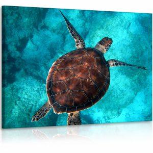 Obraz želva v moři