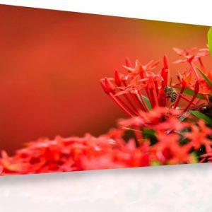Moderní obraz - červené květy