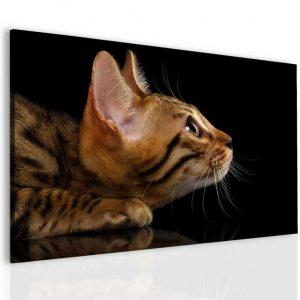 Obraz kočičí pohled