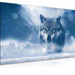 Obraz vlk v zimě