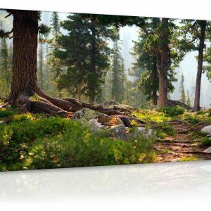 Obraz lesík