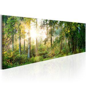 Obraz - Forest Shelter