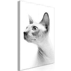 Obraz - Hairless Cat (1 Part) Vertical