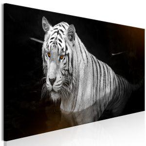 Obraz - Shining Tiger (1 Part) Orange Narrow