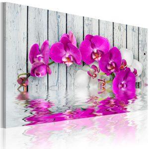 Obraz - harmony: orchid
