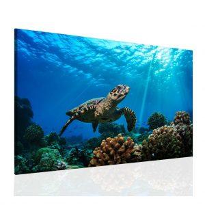 Obraz Mořská želva